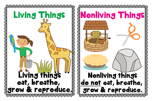 Unit 1 natural science living and nonliving things powerpoint from tltaylor4 ccuart Images